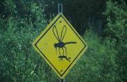 big-mosquito-sign.jpg